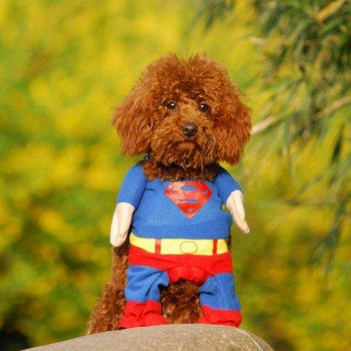 superdog 2